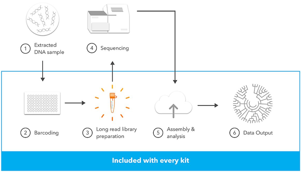 LoopSeq Workflow